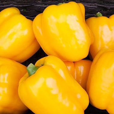 Hepworth Farms Peppers